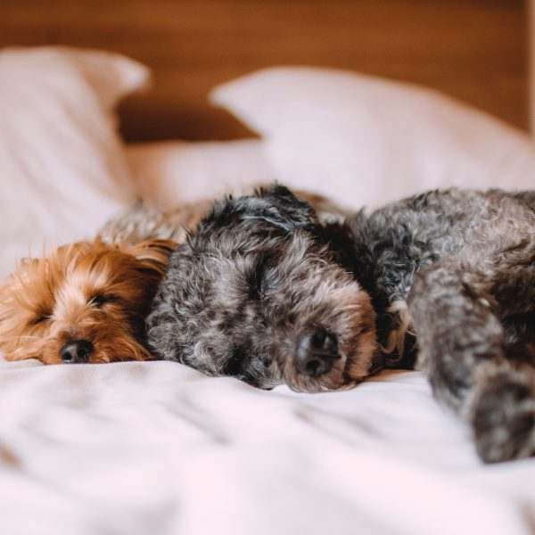 dogs asleep on a bed